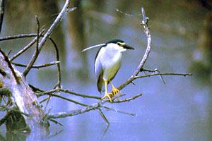 Visitare la riserva naturale di Bandella