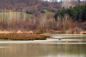 La riserva naturale di Bandella